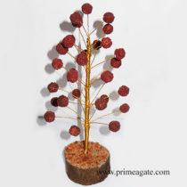 Rudraksha-Tree